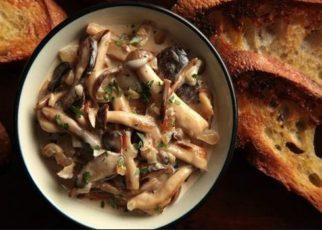 mushroom quiz